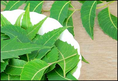 10 Ways You Can Use Neem Oil for Hair Growth to Cure Hair Loss